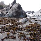 SEAWEED and ROCKS  by Lilian Marshall