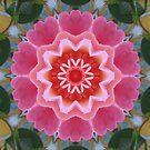 Flower mandala 2 by medley