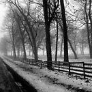 Fog in the Countryside by Brian Gaynor