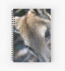 Kangaroo Closeup Spiral Notebook
