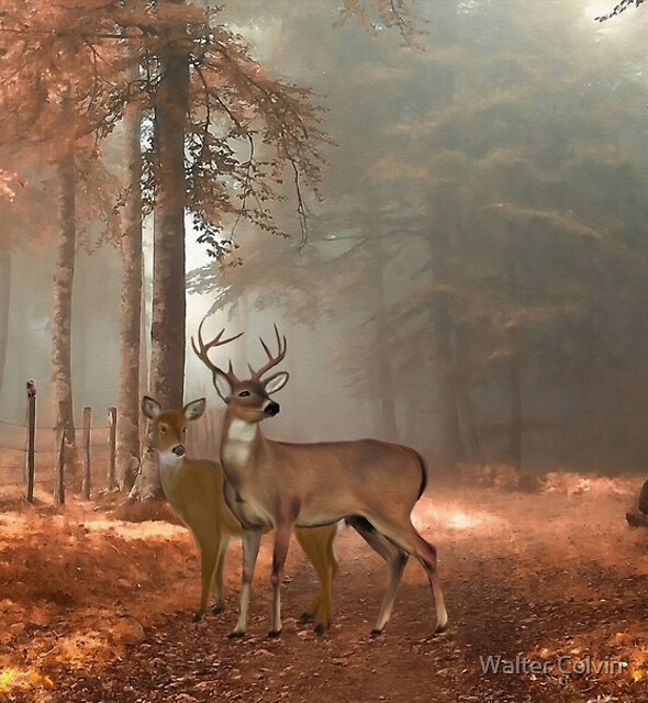 Male and Female Whitetail Deer by Walter Colvin