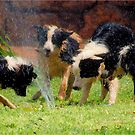 FOUR BORDER COLLIES AND A HOSE! by Magriet Meintjes