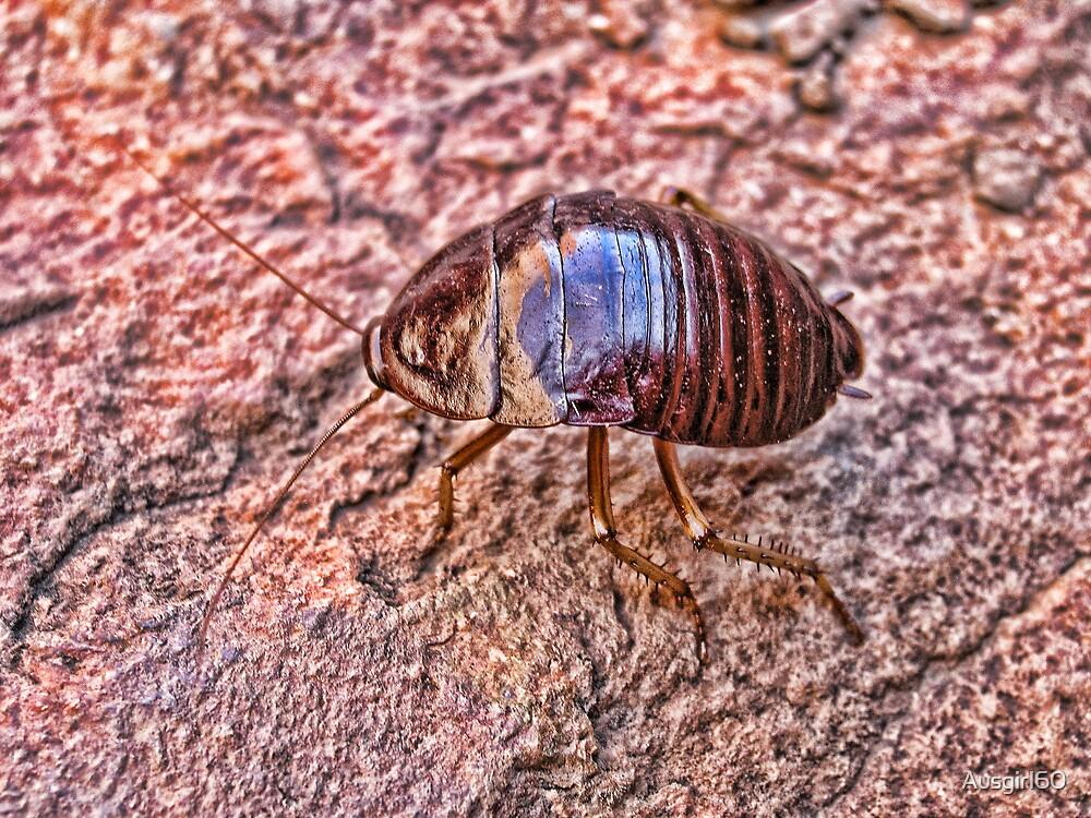 Bush Bug by Ausgirl60