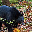 Bear in the Wild... by Terri~Lynn Bealle