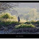 heron by Klaus Bohn