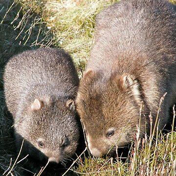 Wombat Mother and Child, Cradle Mountain, Tasmania, Australia. by kaysharp