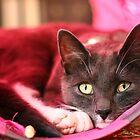 Tunnel kitten by GreyFeatherPhot