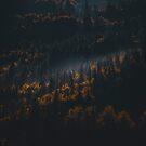 fall by Patrice Mestari