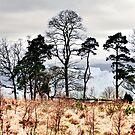 overtoun trees by tomdonald
