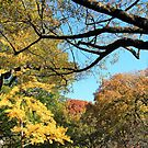 An Autumn Canopy Over Lafayette Park  by Cora Wandel