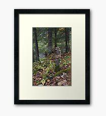 Mushrooms on a Stump Framed Print