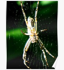 Spider Beauty Poster