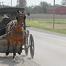 Amish by Klaus Bohn