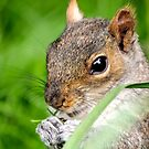 Squirrel in the grass by Leon Woods