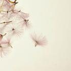 My pink umbrelas by FotosdaMau