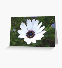 Little White Daisy Greeting Card