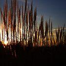 Tall Grass by Richard Skoropat