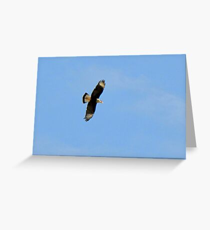 Crested Caracara in Flight Greeting Card