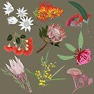 Australian Wildflowers olive by Robyn Hammond