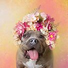Flower Power, Wombat by SophieGamand