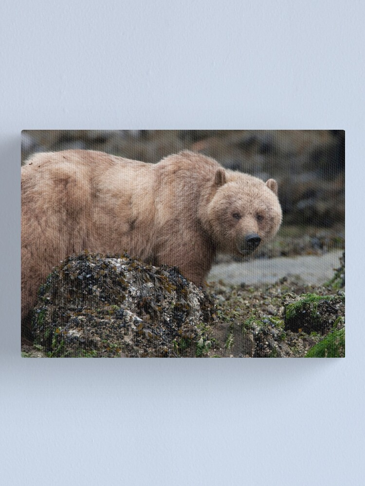 Alternate view of Beachcomber Canvas Print