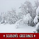 Snow-Flocked Forest Holiday Card by Jared Manninen