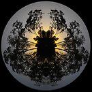 Sunset tree world by Jayson Gaskell