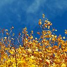 Reach for the Sky - Autumn Glory by EasterDaffodil