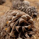 Pinecone trail by eyes4nature