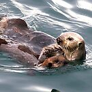 Protective otter mother by eyes4nature