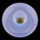 Rainboworld by Jayson Gaskell