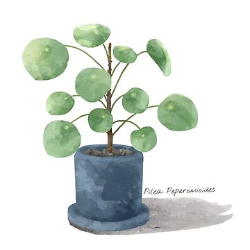 Pilea Peperomioides - [Indoor Plant Love] by xJLe