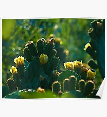 Prickly pear (optuna cactaceae) Poster