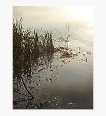 Reeds on Econfina Photographic Print