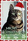 Meowy Christmas  by WiseKitty
