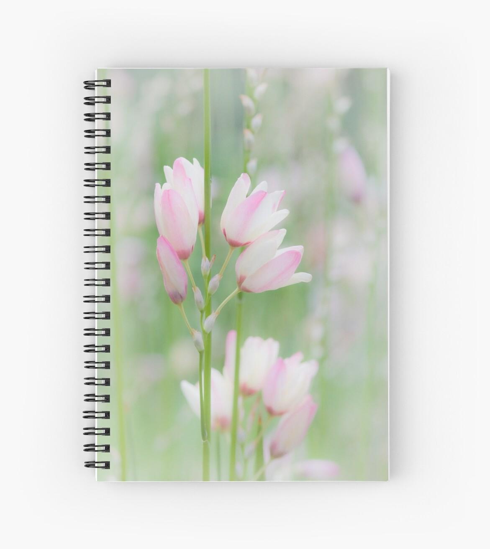 Soft Flowers by Frank Yuwono