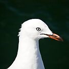 Gull by Patricia Gibson