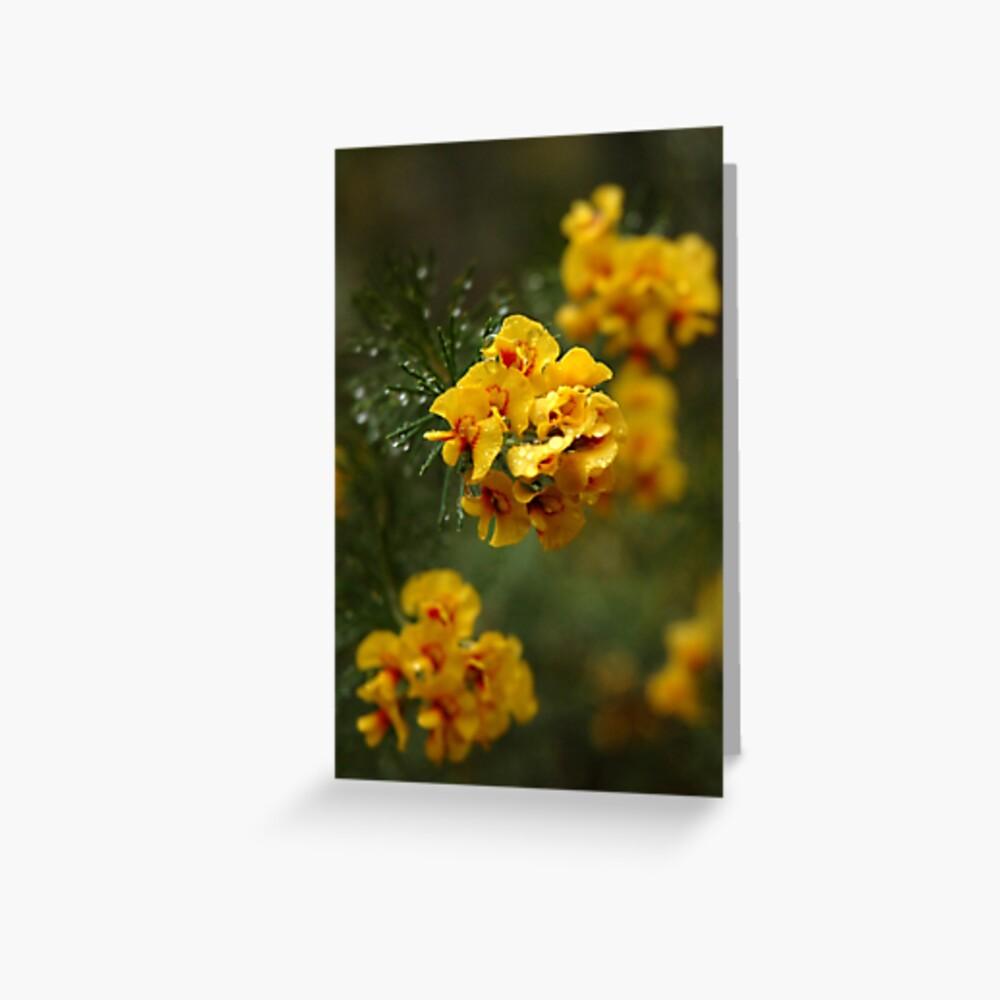 """""""Egg and Bacon Flower"""" (Dillwynia retorta) Greeting Card"""