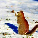 Winter Red by Deborah  Benoit