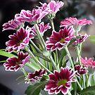 Chrysanthemum by Woodie