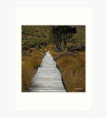 Boardwalk Through the Button Grass - Cradle Mountain National Park, Tasmania Art Print