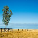 Outback Plains by Dilshara Hill