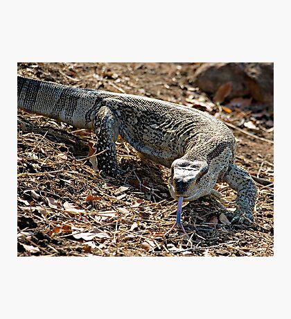 Rock Monitor Photographic Print