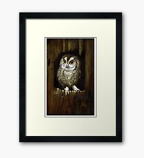 Screech Owl  Framed Print