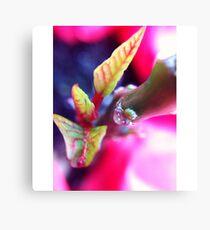 Macro Pink Canvas Print