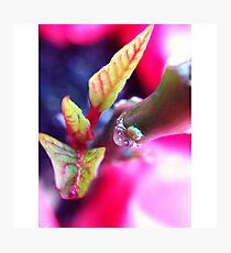 Macro Pink Photographic Print