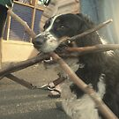 Dog of wonder.  A mouth of sticks and the house of loyalty    2darts, . by Ian Farnbach
