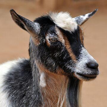 Goat by venny