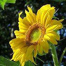 I Need Sunshine on a Rainy Day by Sandra Fortier