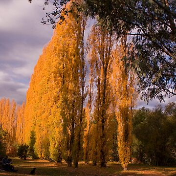 Colours of Fall by richardchen